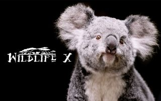 WildlifeX - Awesome series about Wildlife in crisis