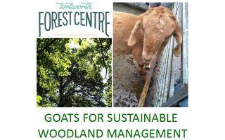 Goats for Sustainable Woodland Management